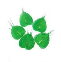 Зеленые Листья сухие стабилизированные натуральные скелетированные 7-9 см 50 шт/уп