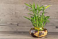 Отдушка  для мыла Зеленый бамбук ,Роскосметика (усиленная концентрация)