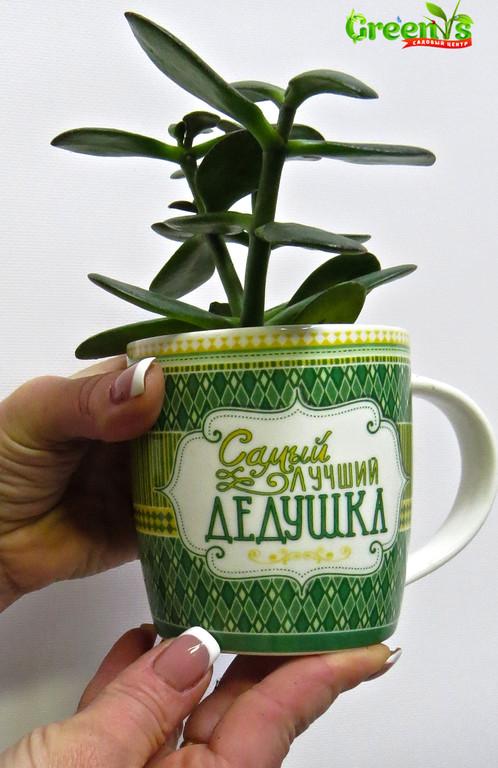 """Специально для Вас Садовый Центр """"Greens"""" представляет Живые подарки к Новому Году! Новогодние принты на наших чашках подарят уют в холодныйвечер за чашечкой горячего чая.    С Любовью """"Greens"""" Для Наших Дедушек!"""