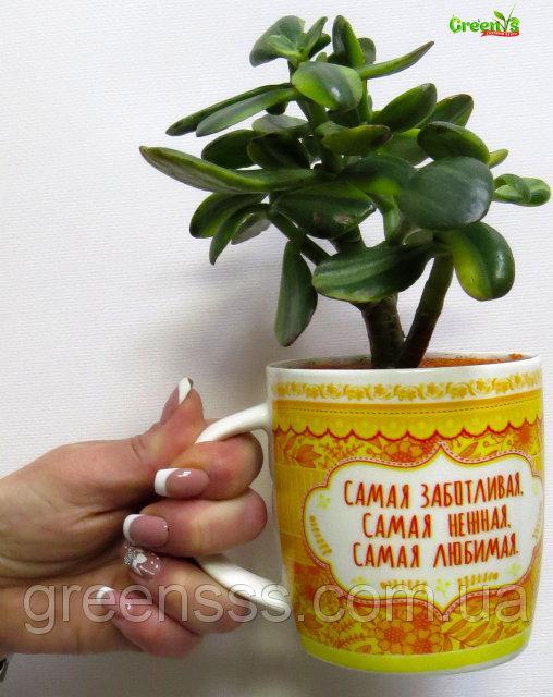 """Специально для Вас Садовый Центр """"Greens"""" представляет Живые подарки к Новому Году!  Новогодние принты на наших чашках подарят уют в холодныйвечер за чашечкой горячего чая.    С Любовью """"Greens"""" Для Наших Бабуличек!"""
