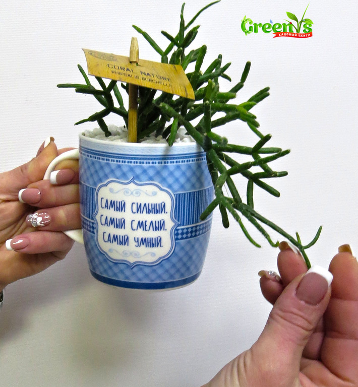 """Специально для Вас Садовый Центр """"Greens"""" представляет Живые подарки к Новому Году!  Новогодние принты на наших чашках подарят уют в холодныйвечер за чашечкой горячего чая.    С Любовью """"Greens"""" ДляСупер Братьев!"""