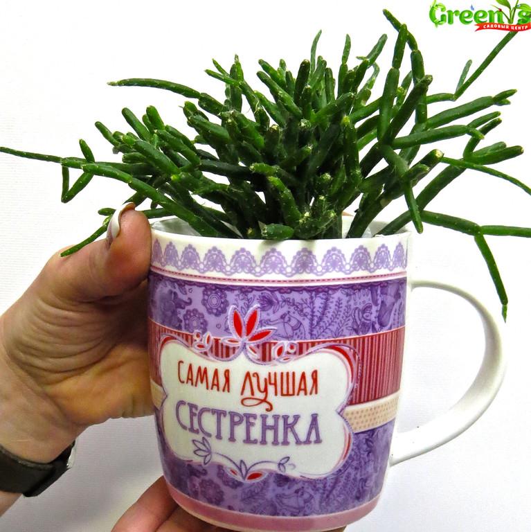 """Специально для Вас Садовый Центр """"Greens"""" представляет Живые подарки к Новому Году!  Новогодние принты на наших чашках подарят уют в холодныйвечер за чашечкой горячего чая.    С Любовью """"Greens"""" Для Сестренок!"""