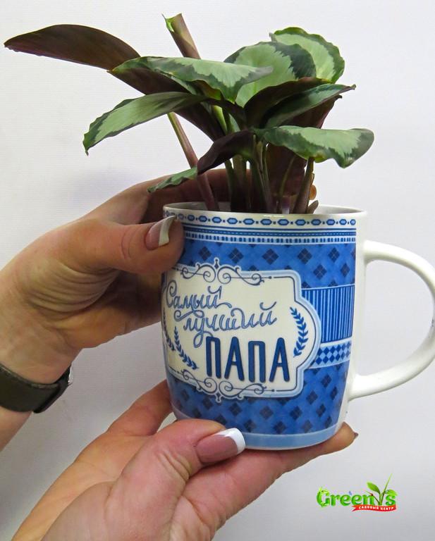 """пециально для Вас Садовый Центр """"Greens"""" представляет Живые подарки к Новому Году!  Новогодние принты на наших чашках подарят уют в холодныйвечер за чашечкой горячего чая.    С Любовью """"Greens"""" Для Наших Папочек!"""