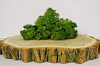 Стабилизированный мох ягель ( Medium Green )