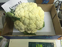 Семена цветной капусты Гохан F1 (2500 сем.) Syngenta
