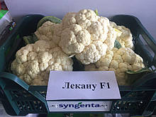 Семена цветной капусты Лекану F1 (2500 сем.) Syngenta