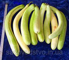 Лагенария Большая зеленая колбаса