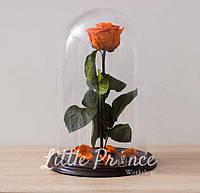 Оранжевая роза в стеклянной колбе (32см)