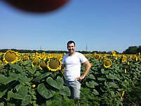 Запуск в поле селяки Great Plains 1500 - 4,5 м. (видео)