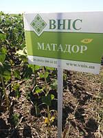 Семена подсолнечника под Гранстар Матадор, Урожайный гибрид, Подсолнух устойчив к засухе и заразихе.