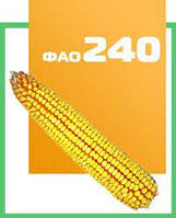 Гибрид кукурузы ДН ХОРТИЦА ФАО 240 п.е.