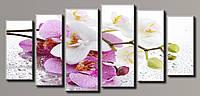 "Модульная картина на холсте ""Орхидея на стекле 7"""