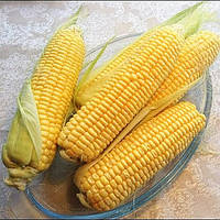 Семена кукурузы Свит Вондер 1000 сем. компании Agri Saaten