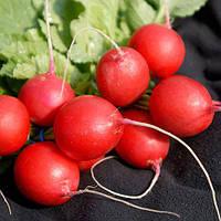 Семена редиса Виенна F1 50000 сем. (3,0-3,25 калибр.) компании Enza Zaden