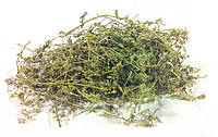 Грыжник голый трава 100 грамм (грыжник гладкий, кильник, остудник, собачье мыло), фото 1