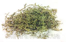 Грыжник голый трава 100 грамм (грыжник гладкий, кильник, остудник, собачье мыло)