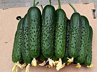 Семена огурца Спино F1 (500 сем.)