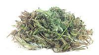 Ястребинка волосистая трава 100 грамм, фото 1