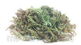 Ястребинка волосистая трава 100 грамм