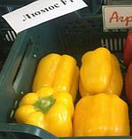Семена перца сладкого Люмос F1 (500 сем.) Syngenta, фото 2
