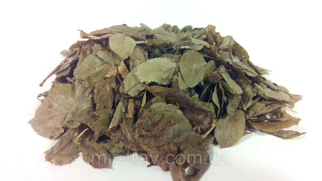 Черника обыкновенная листья 100 грамм