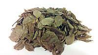 Черника обыкновенная листья 100 грамм, фото 1