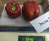 Насіння перцю солодкого Екла F1 (500 нас.) Syngenta, фото 2