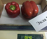 Семена перца сладкого Экла F1 (500 сем.) Syngenta, фото 2