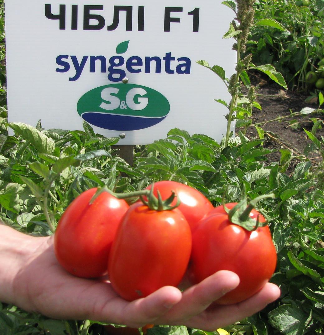 Семена томата Чибли F1 (2500 сем)