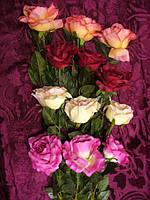 Роза разноцветная , раскрытая , декоративная