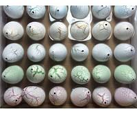 Напухашки яйцо-динозавр 5см арт.311