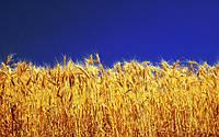 В 2018 году в Украине пройдет общенациональная оценка земель сельхозназначения