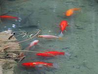 Tetra - корм для прудовых рыб