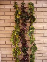 Лиана с листьями
