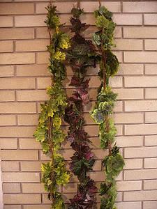 Лиана с резными листьями