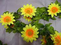 Цепочка цветов подсолнуха