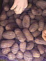 Товарный картофель от производителя.