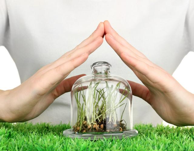 купить средства защиты растений