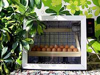 Автоматический инкубатор Господар-60 с переворотом на 60 яиц