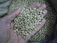 Кофе зеленый в зернах Индия Парчмент Копи Роял 19 (ОРИГИНАЛ), робуста Gardman (Гардман), фото 1