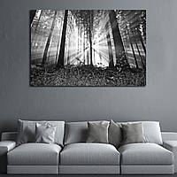 Картина - рассвет в лесу