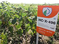 Засухоустойчивый гибрид подсолнечника НСХ 496 под гербицид Экспресс для Юга и Востока Украины. Сербская селекция для высоких урожаев аграриев - 32 ц/га не предел.