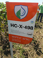 Гибрид подсолнечника под Гранстар Про НСХ 498 для засушливых регионов Украины. Качественные показатели высокие в стрессовых условиях.