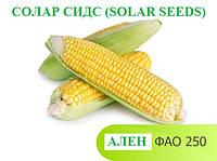 Семена кукурузы АЛЕН ФАО 250