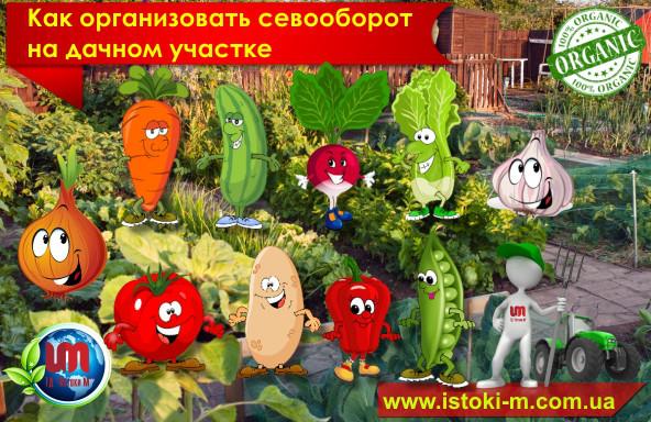 выращивание овощей и зелени на даче