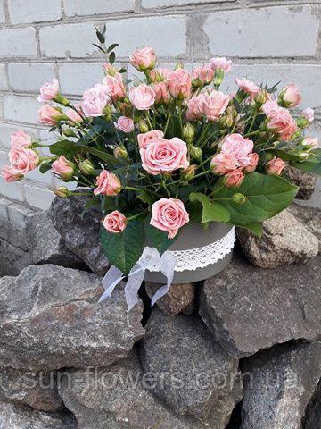 Дрібна трояндочка в капелюшної коробки