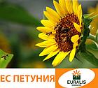 Петуния (Евралис) Семена Подсолнечника, фото 2