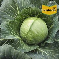 Акварель F1 - капуста белокочанная 2500 семян, Nunhems