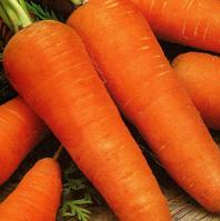 Шантане - морковь, 50 гр, Clause (Клоз) Франция - Фасовка