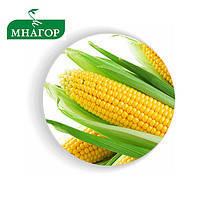 Семена кукурузы сахарной Багратион F1 50 семян Мнагор
